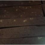 Przyklad zerowiska Spuszczela - maczka drzewna z odchodami