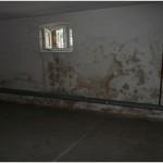 zagrzybiona ściana